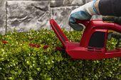 Power Hedger Trimming Hedges