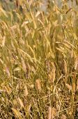 Grains In The Wind