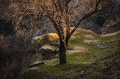 Spring, Autumn Landscape Of A Lonely Tree On The Slopes. In A Warm Tone, Sunset Light poster