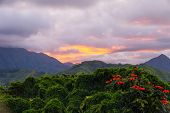 The Plants, Vines, And Flowers Of The Hawaiian Rainforest Glow In The Sunset Light. The Koolau Mount poster