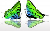illustration with green and blue butterflies
