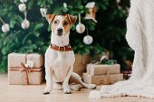 Image Of Pedigree Dog Sits On Floor Near Decorated Firtree And Christmas Presents, Has Festive Mood, poster