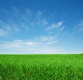pic of blue sky  - Green field and blue sky  with white cloud - JPG