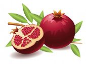 Pomegranate, Isolated Vector Fruit