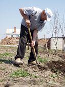 Man Digs Kitchen Garden