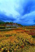 Taiga Meadow