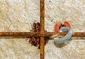 Group of red bugs, thumbtacks hidden behind an iron railing
