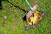 Hand Made African Leaf Rake And Leaves On Grass