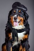 Dog In Black Scarf And Beret