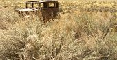 Antique Car in Grasses