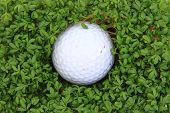 Watercress And Golf Ball