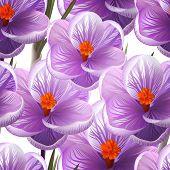 Seamless pattern crocus flowers. Vector, EPS10