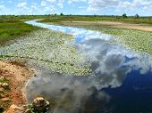 Inhassoro. The River Blooming Algae. Africa, Mozambique.