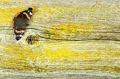 Red Admiral Butterfly On Old Wooden Board