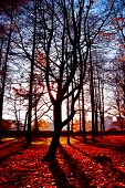 Forest Landscape Fall Wallpaper