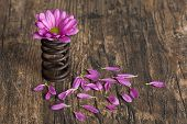 Flower In Metal Spring With Loose Petals On Grunge Wood Surface Artistic Conversion