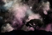 Silhouette of a tree against a sky with stars and nebula
