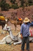 Man with his camels