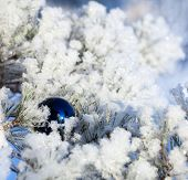 Christmas winter background. Ornaments ball. New year
