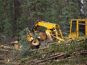 Log Skidder in woods
