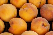 Peach Group From Marketplace