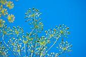 Blue Sky Spring Floral Background