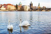 Panorama On Charles Bridge In Prague In The Eveining With Swans