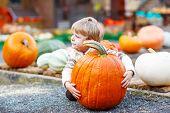 Little Cute Kid Boy Sitting With Huge Pumpkin On Halloween Or Thanksgiving Harvest Festival