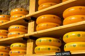 AMSTERDAM - AUGUST 25: Cheese wheels are on the shelves in the store on August 25, 2014 in Amsterdam.