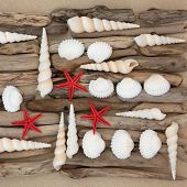 picture of driftwood  - Seashell and driftwood abstract collage on beach sand background - JPG