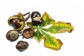 Chestnut fruits and leaf