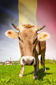 Cow With Flag On Background Series - Chad