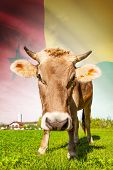 Cow With Flag On Background Series - Guinea-bissau