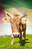 Cow With Flag On Background Series - Sao Tome And Principe