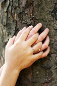 Two hands with wedding rings hugging trunk large tree, close-up
