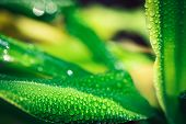 morning nature background with beautiful drop