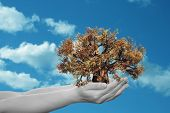 Concept or conceptual human man or woman hand holding a brown autumn tree and blue sky with clouds e