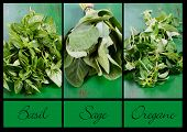 Collage Of Three Fresh Kitchen And Food Preparation Herbs, Basil, Sage And Oregano With Sample Text.