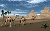 Camels and pyramids - 3D render