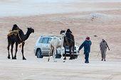 Al Dhafra Camel Festival, Abu Dhabi