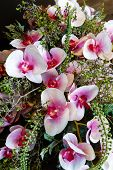 Wonderful Orchid Flowers Composition