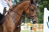 pic of girth  - Brown horse portrait during competition in summer - JPG