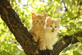 Two Cute Kittens Sitting On The Tree Branch