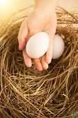 Closeup Shot Of Hand Holding White Egg Against Nest Lit By Sun
