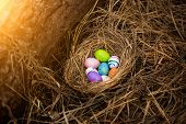 Closeup Shot Of Colorful Easter Eggs Lying In Nest At Forest
