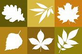 stock photo of ashes  - Vector template of autumn leaves oak maple ash chesnut - JPG