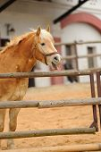 Funny Horse Potrait