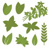 picture of  plants  - isolated herb leaf - JPG