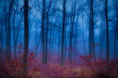 image of mystery  - Mysterious forest in the morning mist at winter time - JPG