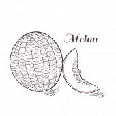 Engaved Melon Vector Illustration